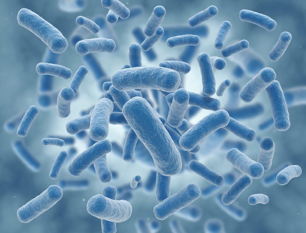 Где могут находиться бактерии